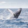 Światowy Dzień Wielorybów